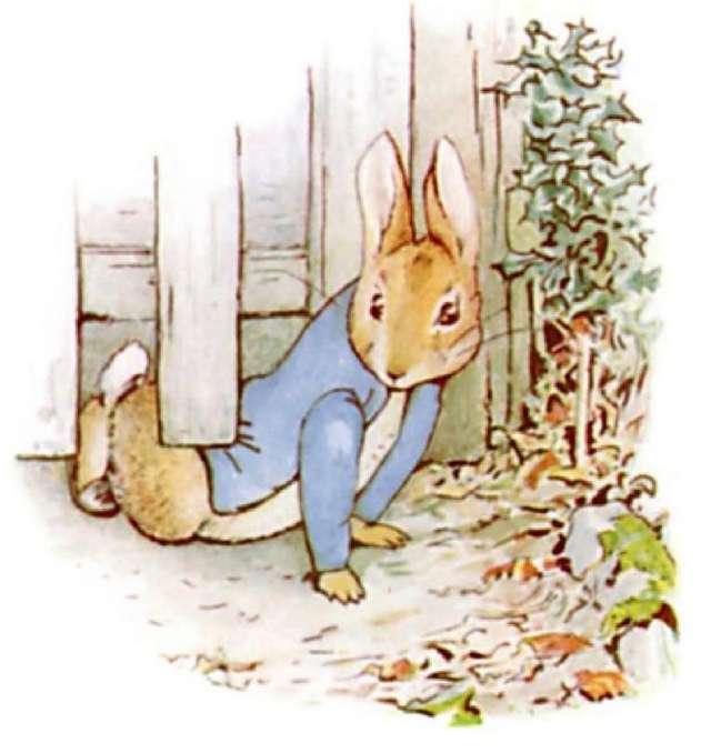 beatrix potter peter rabbit top illustrations by top peter rabbit clip art movie peter rabbit clip art border