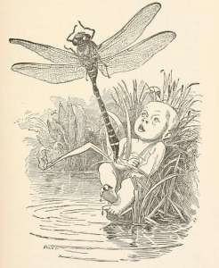 water-babies-illustrated-by-edward-linley-sambourne-41